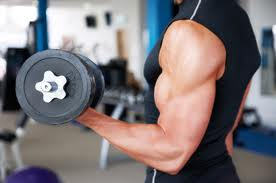masa musculara
