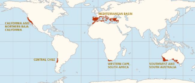 Climatul mediteranean